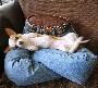 Votre chien aime bien se coucher sur vous ?